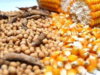 USDA aumenta em 3 pontos percentuais lavouras de soja e milho dos EUA em boas condições