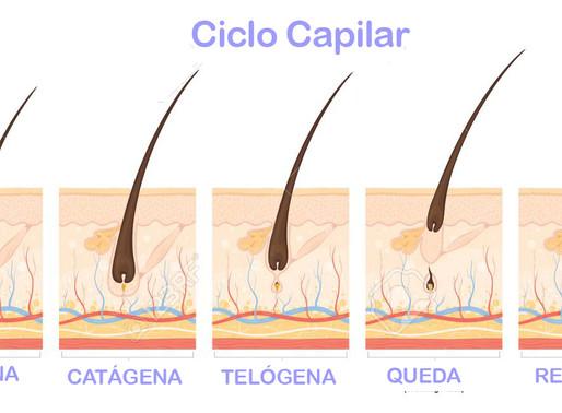 O Ciclo Capilar
