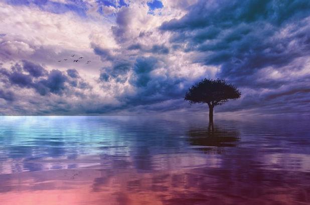tree-3725908_1920_edited.jpg