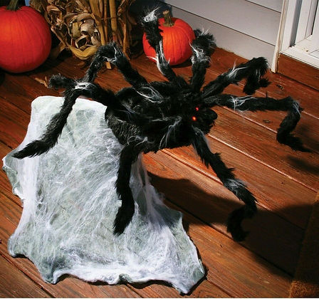 Giant Jumping Spider (91cm)