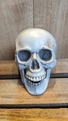Small skeleton skull