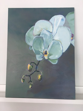 Grey Orchid