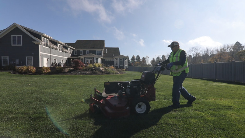 Weed Control and Grass Cutting