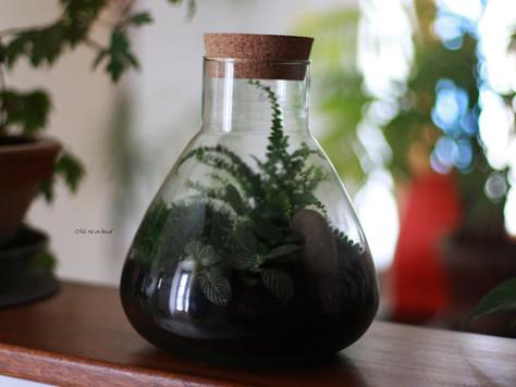 Terrarium : un mini jardin clos