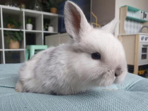 Nous avons adopté une lapine