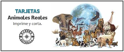 Psicólogos DF Tarjetas didácticas animales Padres Estrella Inc.