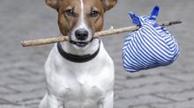 Qué hacer si se pierde el perro de mi hijo?