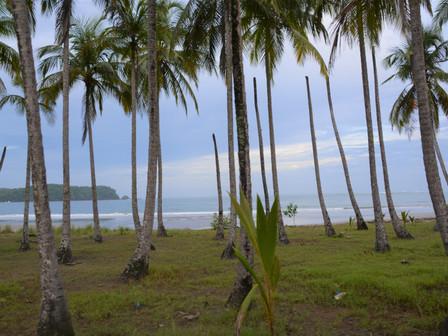 Playa Camaronal, Bac vers Puntarenas , pont de Tarcoles, Jaco  : 26 au 28 Juillet 2018