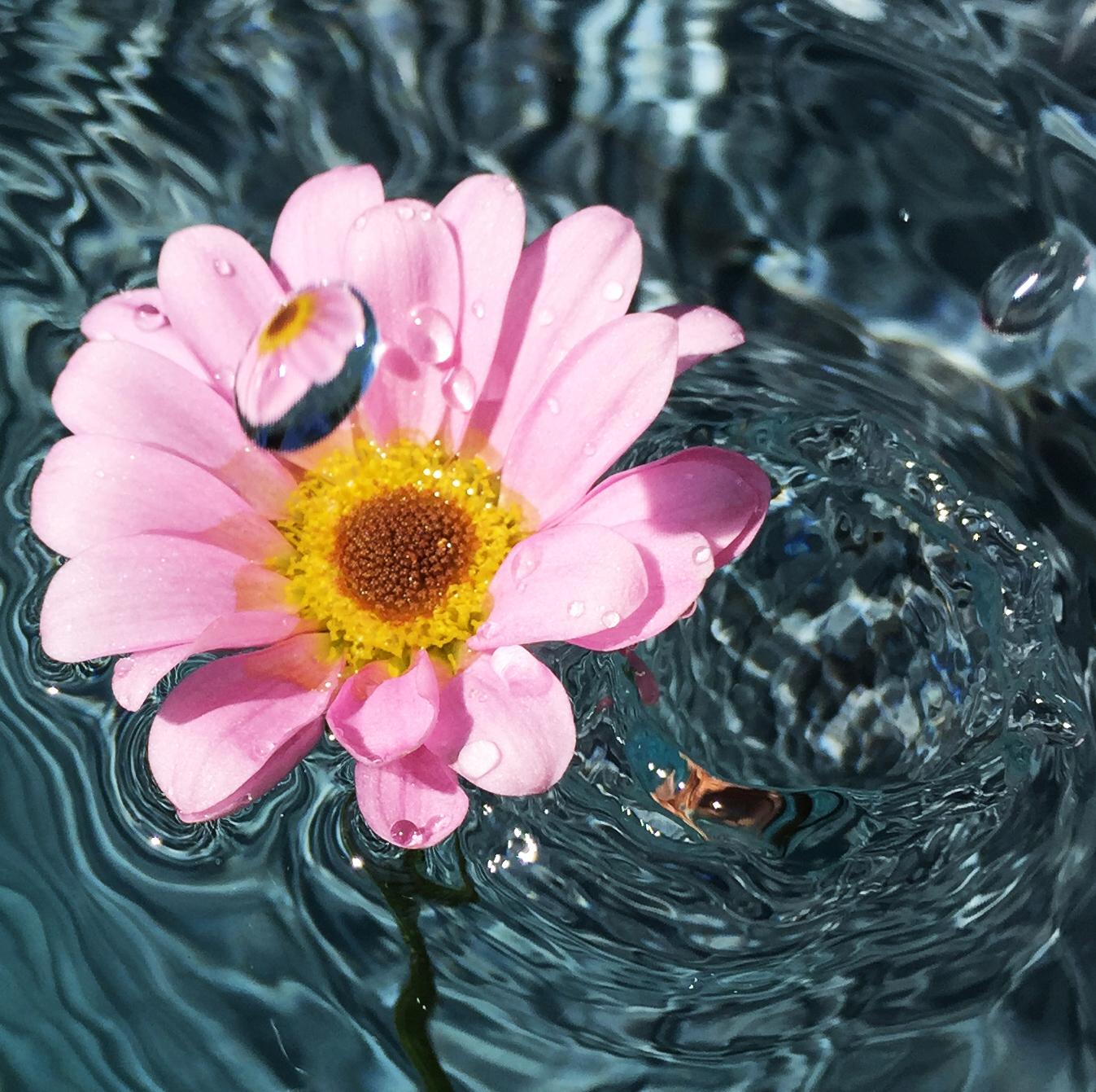 FlowerReflection