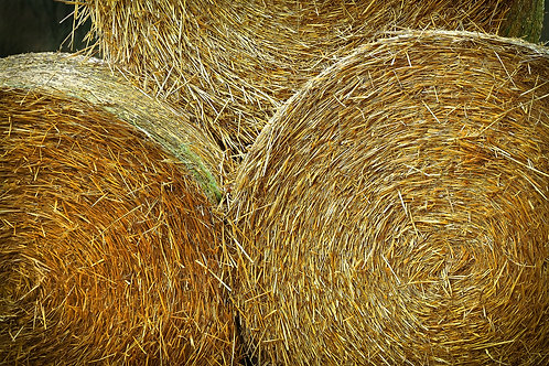 Large bale of haylage