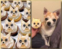 Chihuahua cupcakes