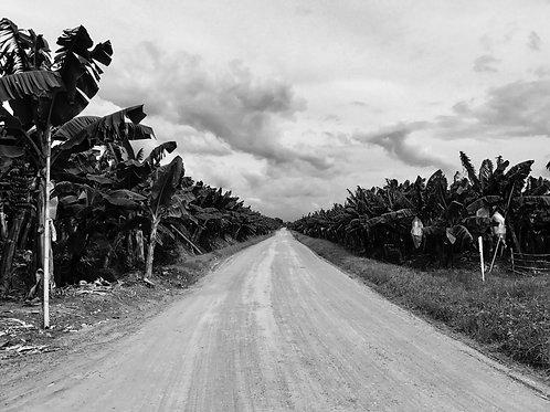 Banana road. Davao, Philippines.