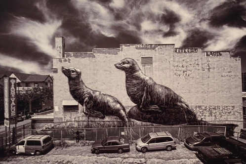 Roa Seals SF