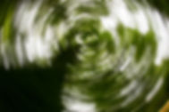JS1-TREE-NF-SWIRL-OCT13-7236.jpg