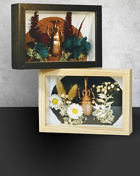 Montage-Cadre-Insecte.jpg