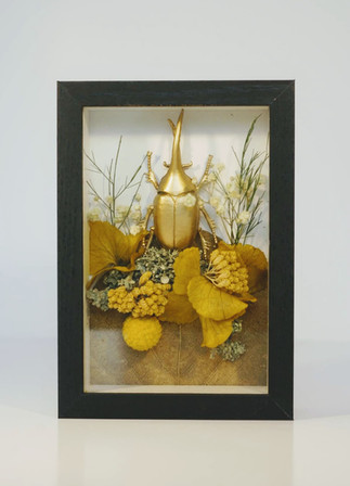 Cadre Insecte-Nymphea Botanique153.JPG