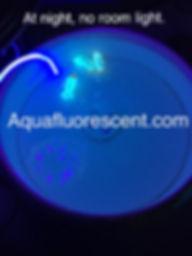 aquafluorescent.com.36.jpg