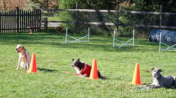 6 Week Dog Training Classes