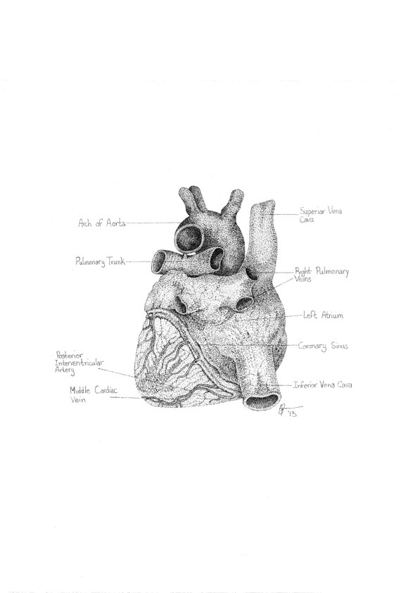 Heart ii Diagram