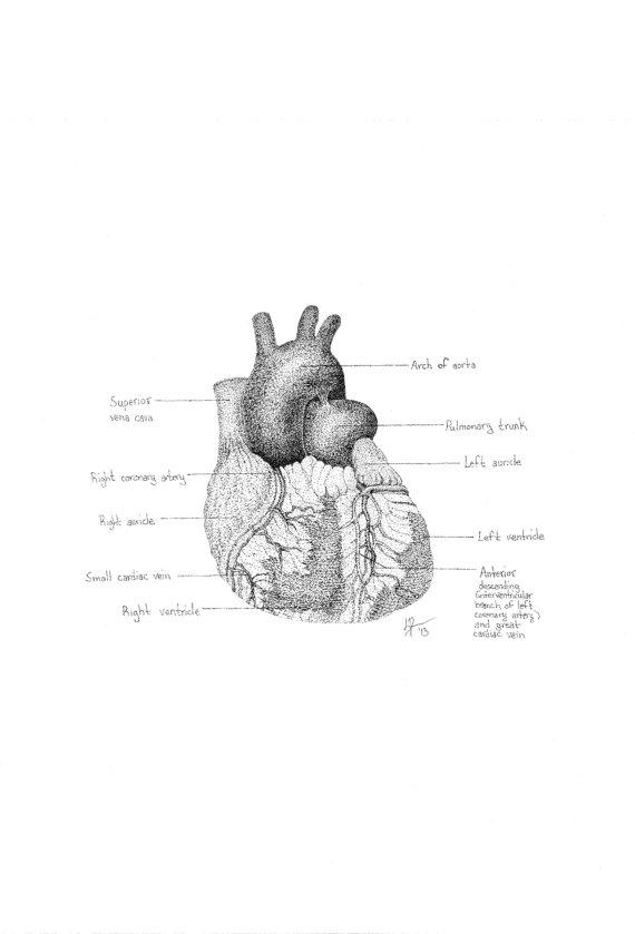Heart i Diagram