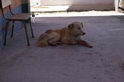 Malingua Dog