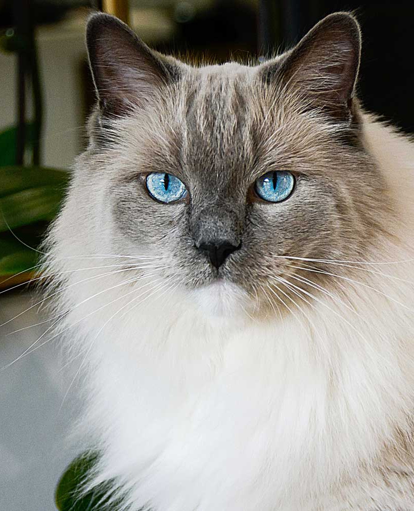 An example of a good cat portrait