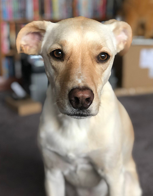 An example of a good dog portrait