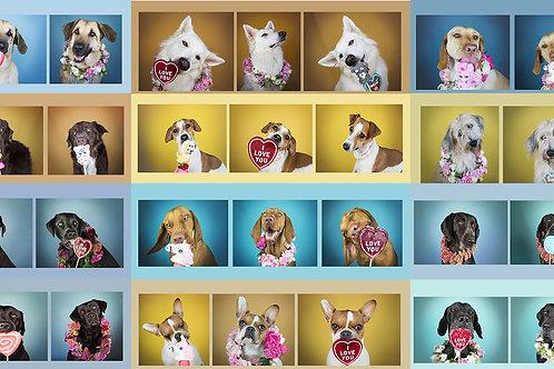 Hundekalender Dogs & Sweets