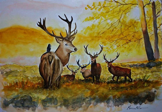 Stags in Richmond Park, watercolour & ink painting