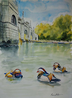 Mandarin Ducks in Richmond