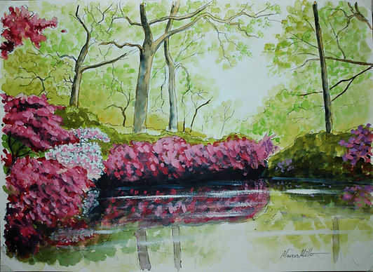 Isabella Plantation - Richmond Park, watercolour & ink painting