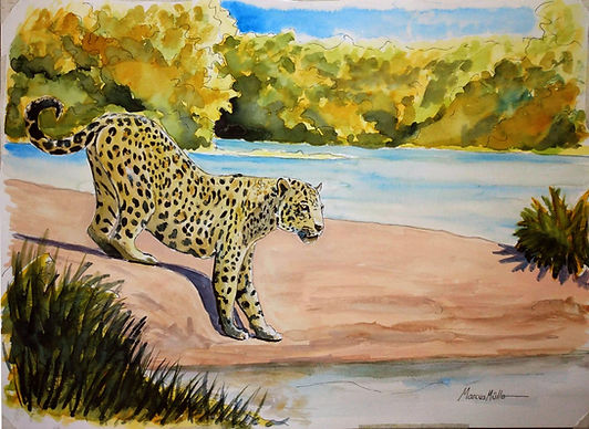 Pantanal - Leopard