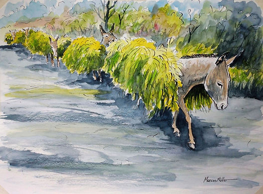 Donkeys on Saint Helena