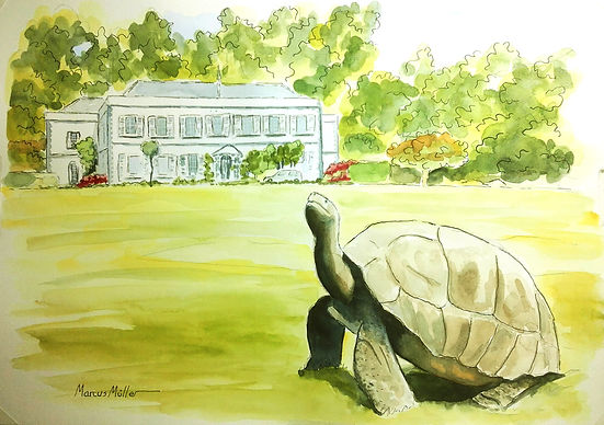Plantation House, with Jonathan the Tortoise