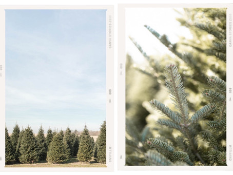 Christmas Tree Mini Sessions in Marshall WI