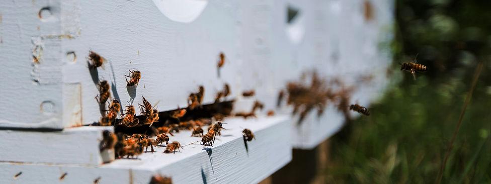 Coming Soon - Bees - Pics.jpg
