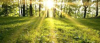 outdoor green sun.jpg
