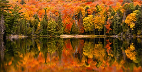 FALL ONT.png
