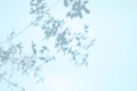 sd_plants1.jpg