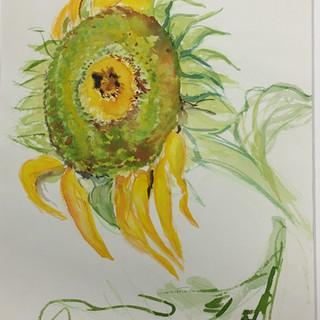 Sunflowers No. 1