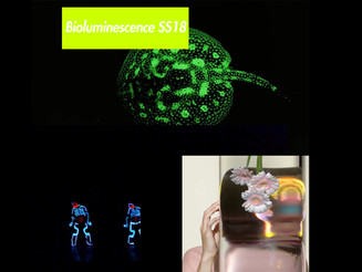 Bioluminescence SS18