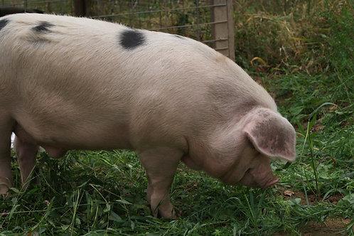 Half Pig Deposit