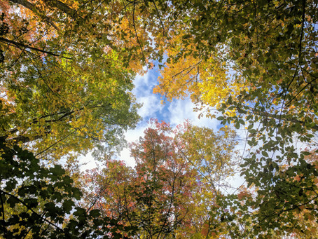 Organiser un stage Nature & Bien-Etre  aux Chalets de La Marcairie