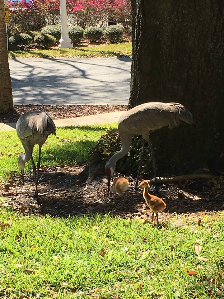 Sand cranes and babies at John Knox Village, a Retirement Community that Interiors for Seniors frequently does moves for.
