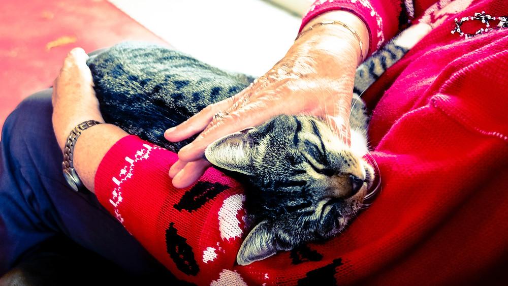 eldely woman petting cat