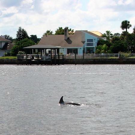 dolphin jumping in the bay