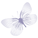TWH Butterfly transparent.png