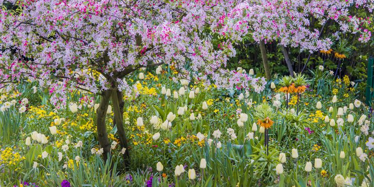 Beautiful field of flowers that a customr of Interiors for Seniors likes.