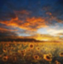 sunflower-field-730446_1920.jpg