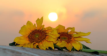 sunflower-1557101_1920.jpg